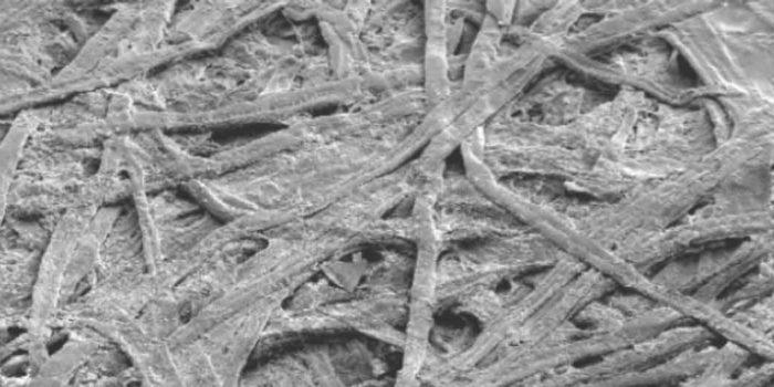 La Carta Al Microscopio